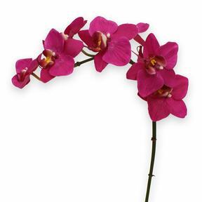 Kunstplant Orchidee paars 80 cm