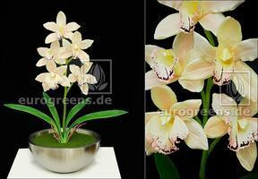 Kunstplant Orchidea Cymbidium creme 50 cm