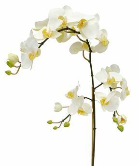 Orchidee kunsttak wit 110 cm