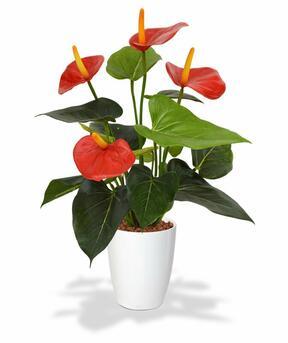 Kunstplant Anthurium rood 40 cm