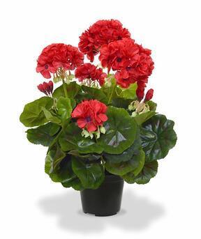 Kunstplant Pakost rood 40 cm